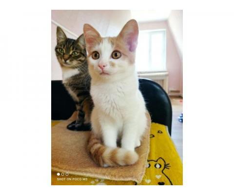 Котёнок Сырник хочет быть чьим-то счастьем