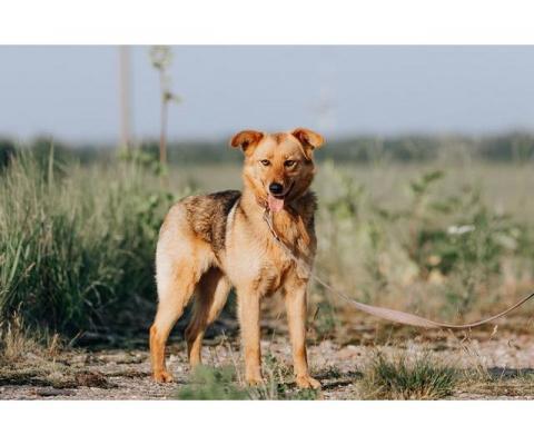 Ищет дом и семью собака по кличке Лиса.