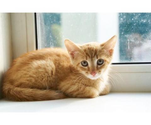 Супер ласковый 3 мес котенок Апельсин ищет дом!