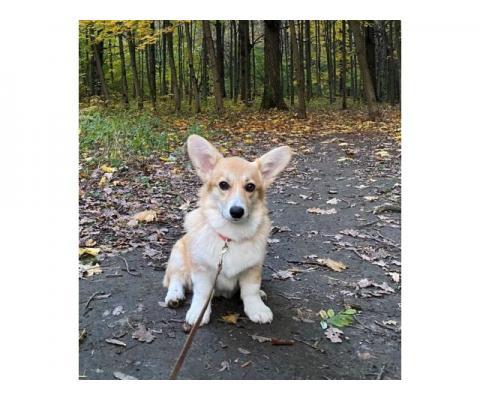 Пропала собака в Бутово || УЖЕ НАШЛАСЬ!!!